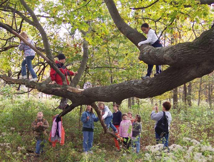 Tree-mendous Adventures